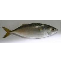 Ikan Pelaling 1KG